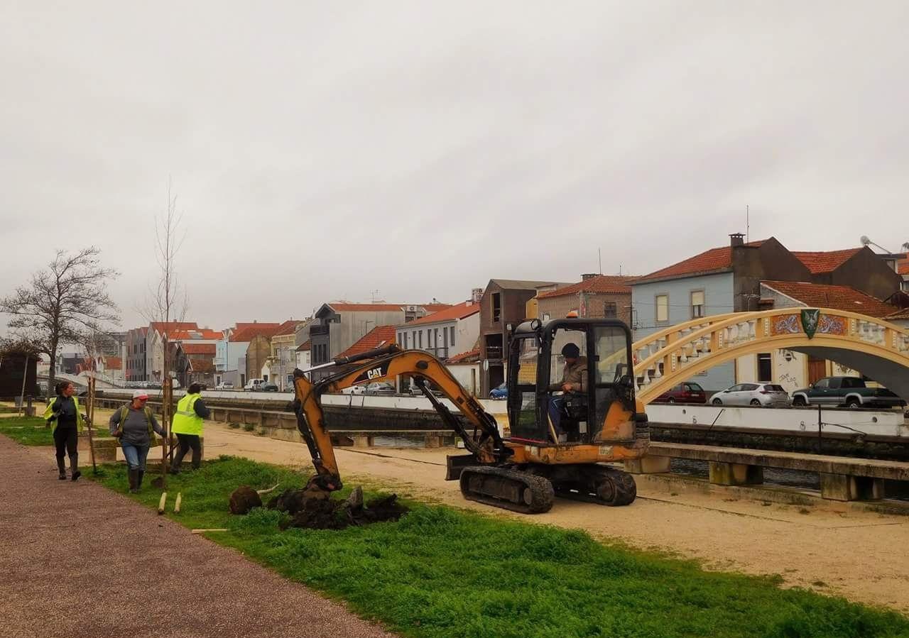 Plantação de árvores ao longo do canal de São Roque - Aveiro 2017