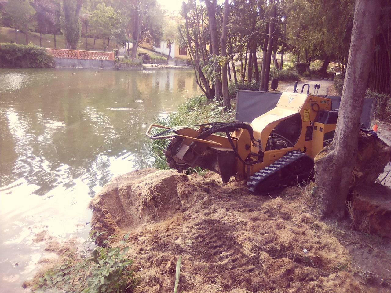 Remoção de cepos no parque da cidade - Aveiro 2019